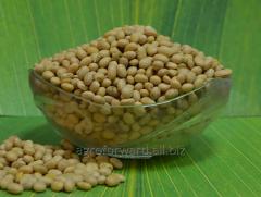 Soy grain