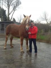 Horse - Flamandec heavy truck