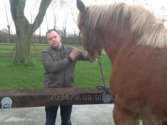 Horse - Flamandec 2 heavy truck
