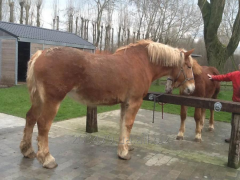 Horse - Flamandec 3 heavy truck