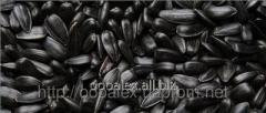 Семена подсолнечник кондитерский
