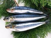 We sell light-salted fish.