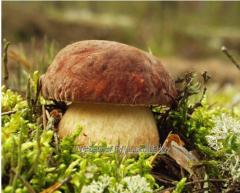 Заморожений білий гриб клас 1,  клас 2