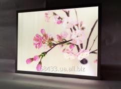 Freymlayt, superthin LED (LED) Framelight panel