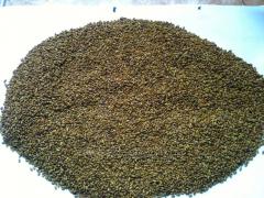 Grass seeds Kozlyatnik (Galega)