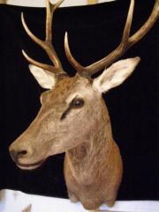 Deer noble