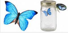 """Вечная бабочка """"Blue Morpho"""""""