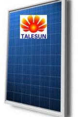 Solar TALESUN TP660P-250W 250 module of W