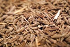Kumin (zirya), seed