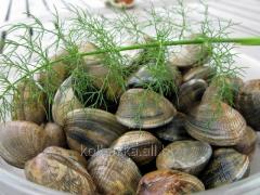 Klams (mollusk), 1 kg