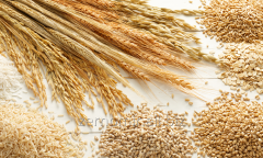 Wheat - 2,3 class