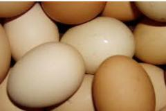 Яйца куриные оптом