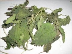 Крапива листья