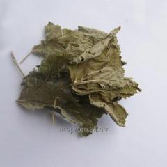 Ежевика листья