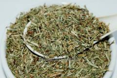 Knotweed grass