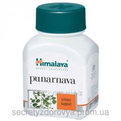 Sredchtvo for treatment of mocheispuskateny system
