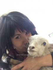 Dwarfish nanny-goat – farmstead model
