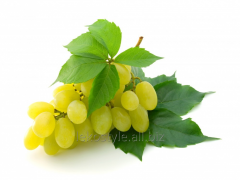 Oil of grape seed, water-soluble