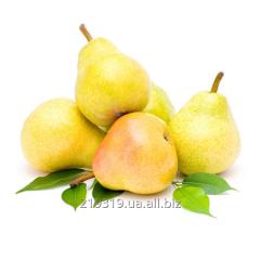 Fragrance Pear powdery