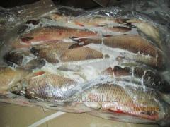 Carp fresh-frozen 1,2, fish fresh-frozen