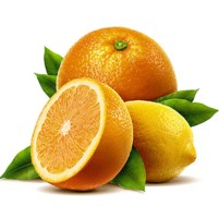 ESSENTIAL OIL OF THE LEMON
