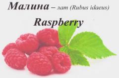 Frozen raspberry varieties Shelf and floor