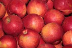 Apples grade Adared