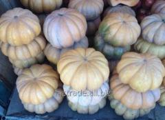 Pumpkin de Provence Musca