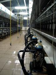 Milking Milkline hall