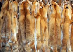 Выделка шкур лисы