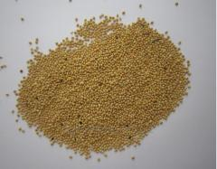 Millet white, red, yellow. Agricultural production