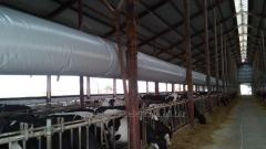 Ventilation systems for dairy cattle and goats
