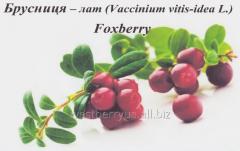 Frozen cranberries berries