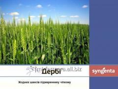 Derby herbicide