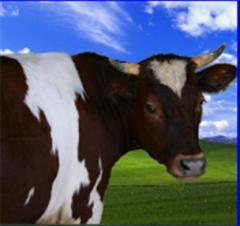 Премиксы для сельскохозяйственных животных.