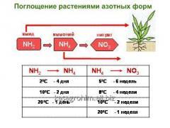 Carbamide and Ammoniac Mix (CAM)