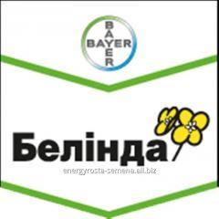 Colza hybrid Belinda