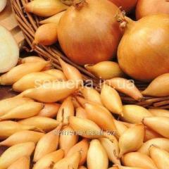 Семена Лук севок Стурон, Артикул УТ000002849