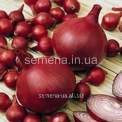 Семена Лук севок Ред Барон, Артикул товара УТ000002803