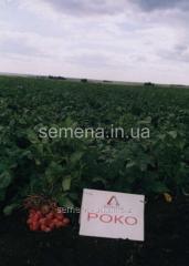 Семена картошки Роко, Артикул УТ000003848
