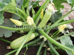 Seeds of vegetable marrows Alija of F1, Article