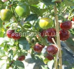 Cherry pepper seeds Fayr of F1, Article 4801