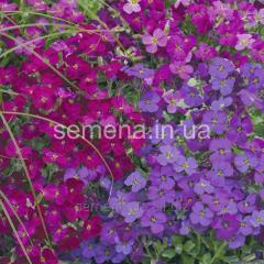 Flowers seeds, Obriyet's Perennial hybrid