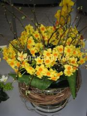 Flowers seeds Martinette Narcissus, Article of