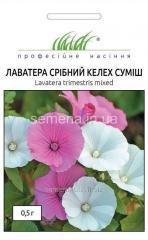 Flowers seeds, Odnoletnik Lavatera Silver glass