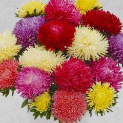 Семена цветов, Однолетник Астра Ювель, Артикул УТ000003686