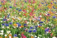 Seeds of flower mixes of the Elite Series Fragrant