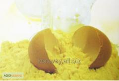 Egg powder (melange)