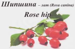 Mrożonych owoców dzikiej róży