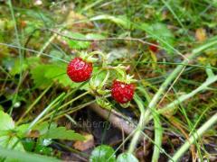 Frozen wild strawberry